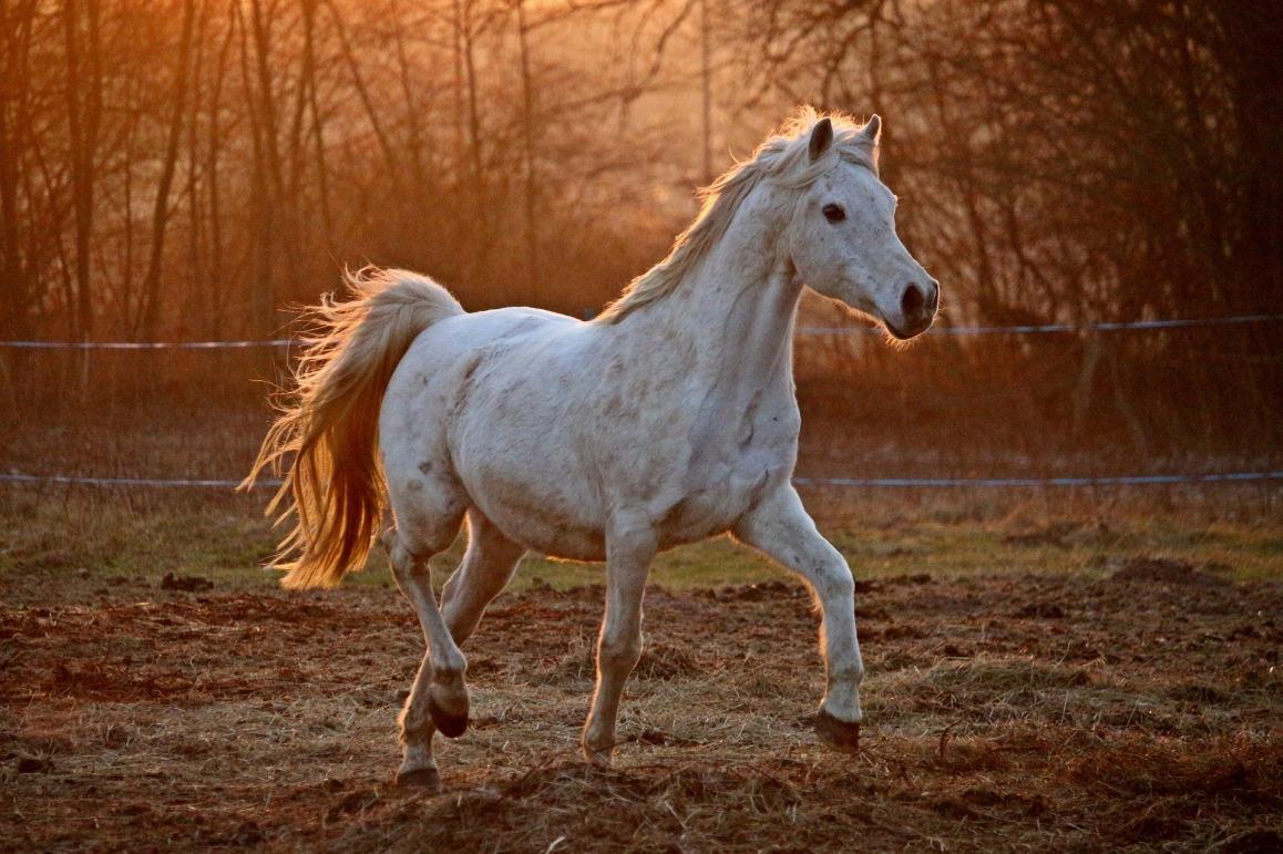 horse-2063673_1920